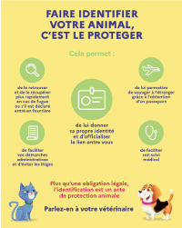 [Flyer] Identification animaux domestiques -  PDF - 488.8 ko
